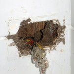 Pest Inspection Gold Coast. Termite nest in wall.