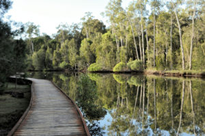 The Coombabah Wetlands, nature reserve
